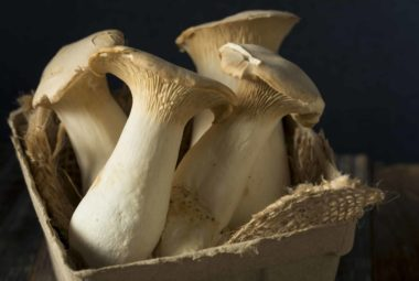 King Oyster Mushrooms