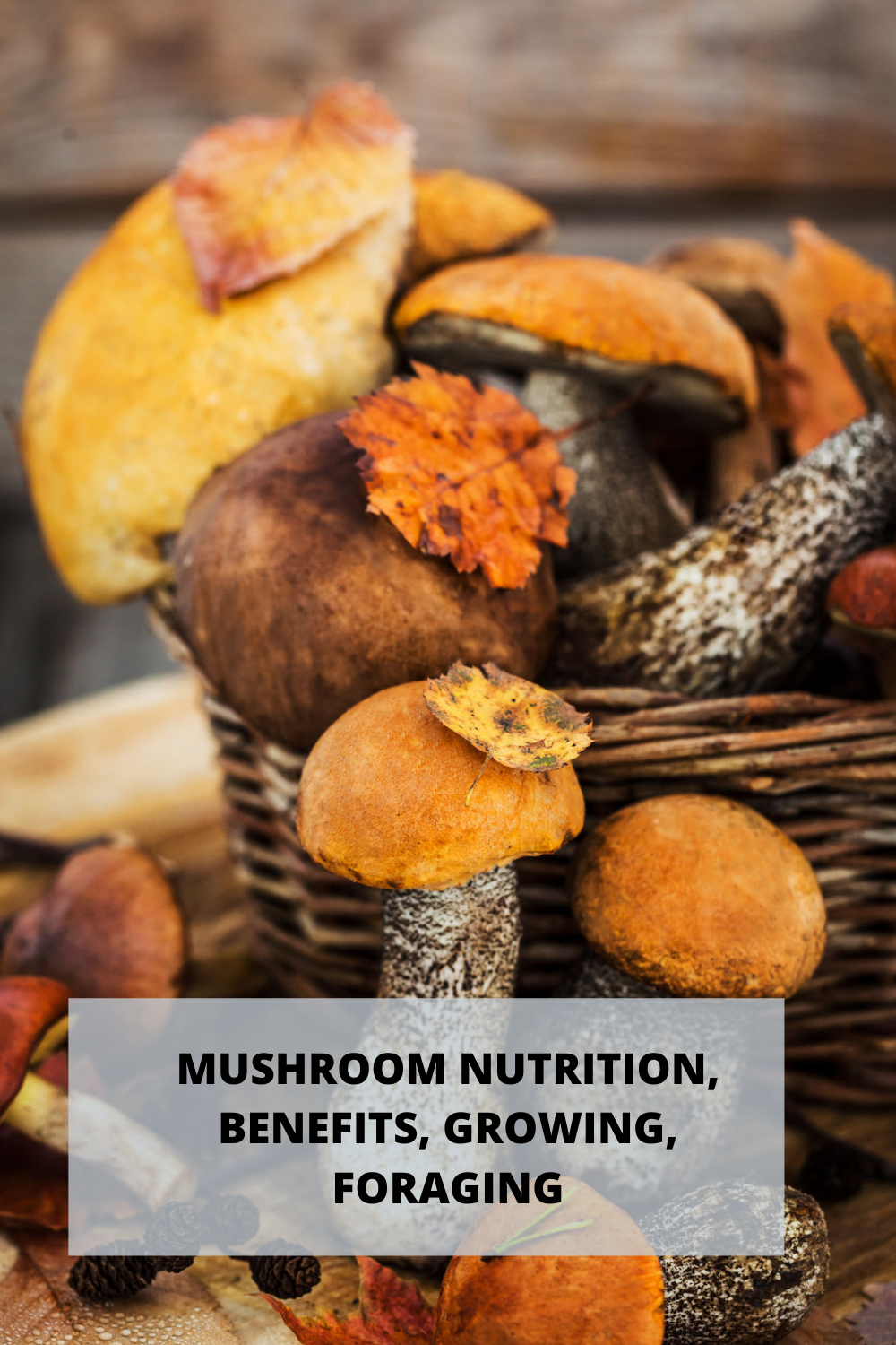 Mushroom Nutrition and Benefits